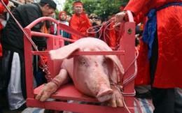 Lễ hội chém lợn: Vì sao người dân lại thích nhúng tiền vào máu?