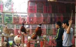 Bán chim hoang dã cạnh UBND xã đang có dịch cúm A/H5N6