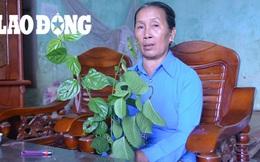 Bà lang người Dao có bài thuốc chữa bệnh gan giúp nhiều người thoát bệnh tật
