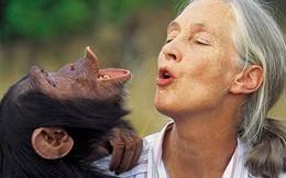 6 loài vật hành động giống con người một cách kinh ngạc (P1)