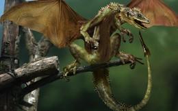 Loài rồng đã từng tồn tại trên thế giới?