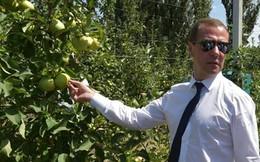 Thủ tướng Nga Medvedev tới đảo Kuril, Nhật Bản phản đối dữ dội