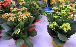 Nên cắm hoa gì trong ngày Tết?