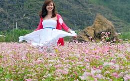 Khám phá 3 vùng hoa Tam Giác Mạch đẹp nhất Việt Nam
