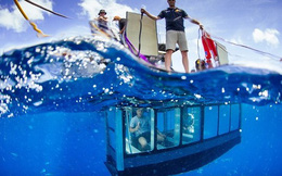 """""""Thiên đường"""" giúp bạn trải nghiệm cảm giác... ngắm cá mập"""