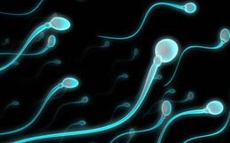 Tại sao tinh trùng biết 'bơi'?