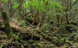 Ám ảnh khu rừng tự sát tại Nhật Bản
