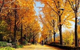 Những mùa thu châu Á đẹp đến ngỡ ngàng