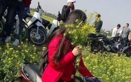 """Ngày hôm nay, cả vườn hoa cải phải """"khóc ròng"""" vì cô gái áo đỏ này"""