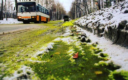 Người dân thất kinh phát hiện nguyên nhân thực sự khiến lớp tuyết trắng trở nên xanh mướt