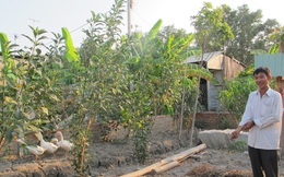 """Công an huyện Bình Chánh xin rút hồ sơ vụ án """"chòi vịt"""""""