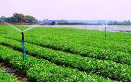 """Cái lắc đầu đáng sợ của người trồng """"rau an toàn"""" ở Hà Nội"""