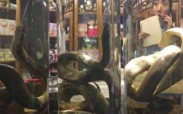24h qua ảnh: Nhà hàng bán rượu rắn hổ mang ở Triều Tiên