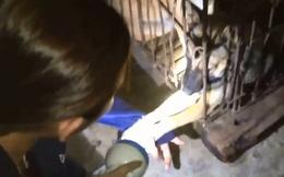 Xúc động clip chú chó trong lò mổ cố níu tay cô gái để cầu cứu