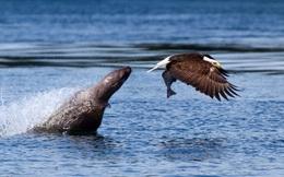 24h qua ảnh: Sư tử biển cay cú vì bị đại bàng cướp mồi ngay trước mắt