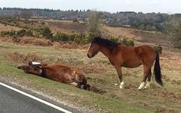 24h qua ảnh: Rơi nước mắt cảnh ngựa con thẫn thờ bên xác mẹ