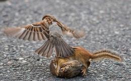 24h qua ảnh: Kịch tính xem chim sẻ ngăn cặp sóc chuột hỗn chiến