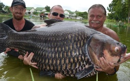 24h qua ảnh: Bắt được cá chép nặng nhất thế giới, 3 người mới khiêng nổi