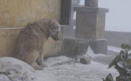 """Chú chó co ro dưới trời tuyết và sự """"đạo đức giả"""" của dân mạng"""