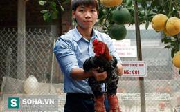 Giám đốc 9x chăn gà Đông Tảo kiếm tiền tỷ