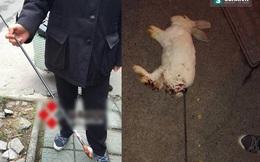 Giật mình trước hành vi giết hại động vật tàn ác của hai đứa trẻ