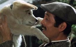 Xem những bộ phim về loài chó này đảm bảo bạn sẽ rơi nước mắt