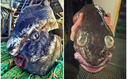 Đi biển có nghề, ngư dân trẻ vẫn tim đập chân run khi phát hiện thứ này mắc vào lưới