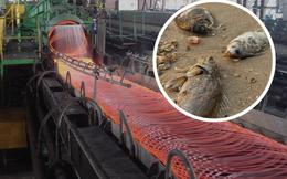 Formosa làm cá chết hàng loạt: Đại gia ngành thép Việt Nam bị tác động như thế nào?