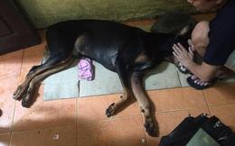 Người đâm chết chú chó Doberman ở đường Nguyễn Chí Thanh liệu có bị xử phạt?