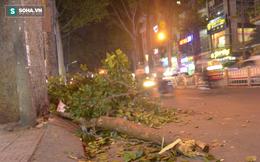TP.HCM: Nhánh cây bất ngờ gãy, đè cả gia đình đang đi xe máy bị thương