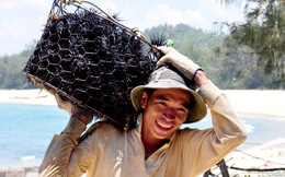 Ngư dân Quảng Ngãi thu nhập cao từ 'đặc sản tiến Vua'