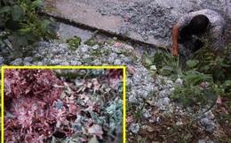 Đống tiền giấy bị cắt vụn bên đường dấy lên nghi án quan tham phi tang vật chứng