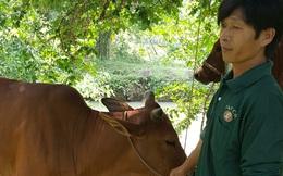 """Mùa đóng góp hãi hùng ở Thanh Hóa: Dắt bò, thu xe và ép dân nghèo đóng góp như """"xã hội đen"""" xiết nợ"""
