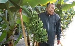 Lão nông Nhật tìm ra chìa khóa giải quyết tình trạng thiếu lương thực toàn cầu sau khi tái tạo kỷ băng hà để trồng chuối