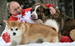 Tổng thống Putin từ chối nhận chó quý của Nhật Bản