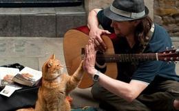 Cứu rỗi chàng nghệ sĩ nghèo vào thời điểm khốn khó nhất, chú mèo vàng trở thành nguồn cảm hứng của cả thế giới