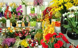 Đắt đến mấy cũng nên mua thêm hoa này đặt trong nhà ngày Tết, tài lộc rủng rỉnh cả năm