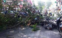 3 người bị nhánh cây me tây đè trúng ở đường phố Sài Gòn