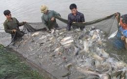 """Vì sao chưa công bố danh sách hơn 800 sản phẩm thủy sản được hợp quy """"khống""""?"""