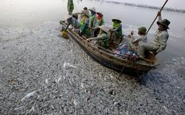 24h qua ảnh: Cảnh cá chết hàng loạt ở hồ Tây lên báo Anh