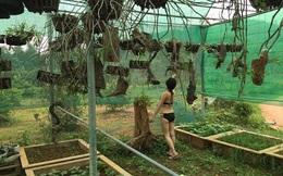"""Bộ ảnh """"khỏa thân làm vườn"""" sáng tạo của người Việt"""