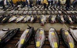Thăm chợ đấu giá cá ngừ đầu năm ở Nhật Bản