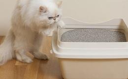Gạo không hiệu quả, hãy dùng cát vệ sinh mèo để cứu điện thoại rơi nước