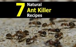 Với những nguyên liệu tự nhiên và dễ kiếm này, kiến sẽ tự động tránh xa nhà bạn