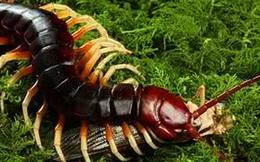 Kích thước thật của những sinh vật quen thuộc từ hàng triệu năm trước: To đến kinh hoàng