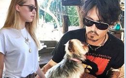 """""""Cướp biển"""" Johnny Depp tranh quyền nuôi chó với vợ trẻ"""