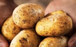"""Khoai tây trở thành """"chất gây độc"""" vì những cách dùng sai của mọi người"""
