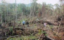 Phá rừng tại Yên Bái rất tinh vi và phức tạp