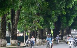 Hà Nội chặt, chuyển hơn 100 cây xanh để làm đường sắt đô thị