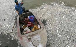 Chủ tịch Nguyễn Đức Chung trực tiếp chỉ đạo xử lý vụ cá chết trắng ở Hồ Tây